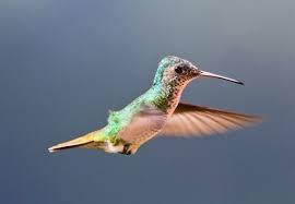 Elindult a Google Kolibri
